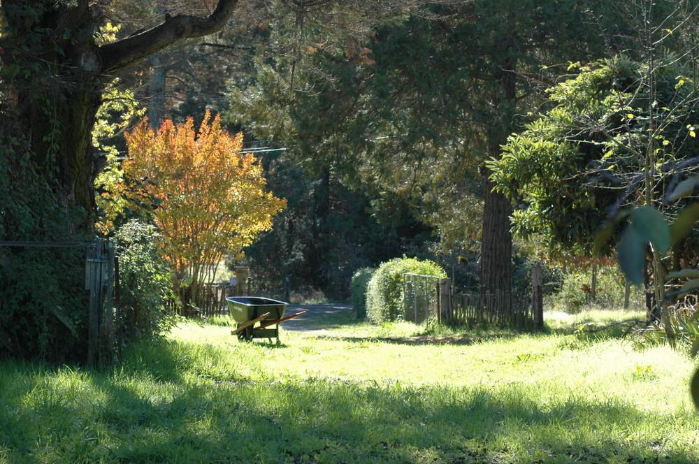 Grass_2009