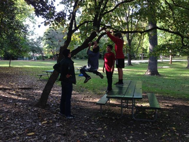 TreeClimbing_BoysWeekend