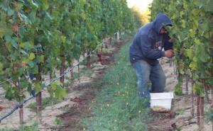 Harvestworker
