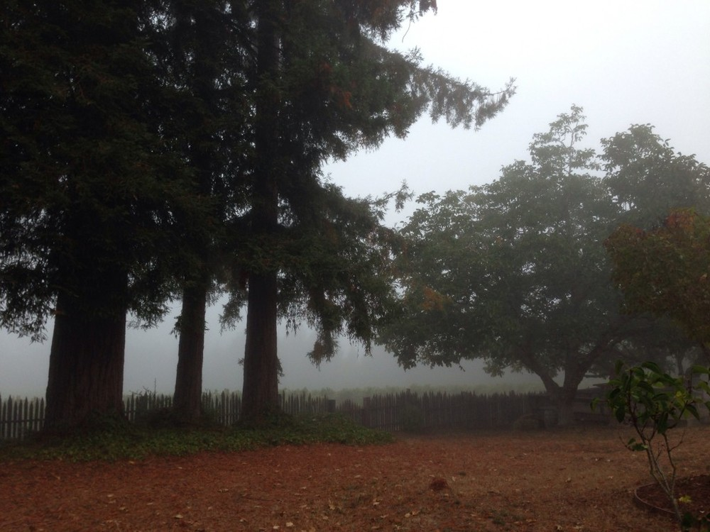 Fog_GantzFamilyVineyards