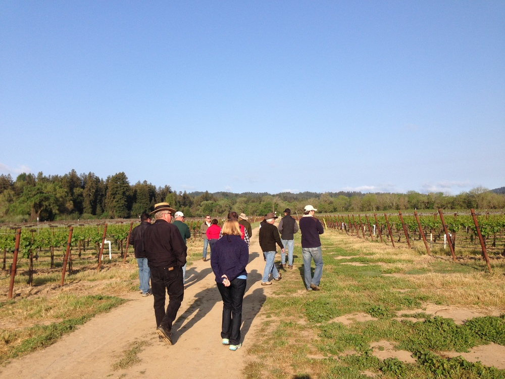 VIneyardWalk_GantzFamilyVineyards.jpg