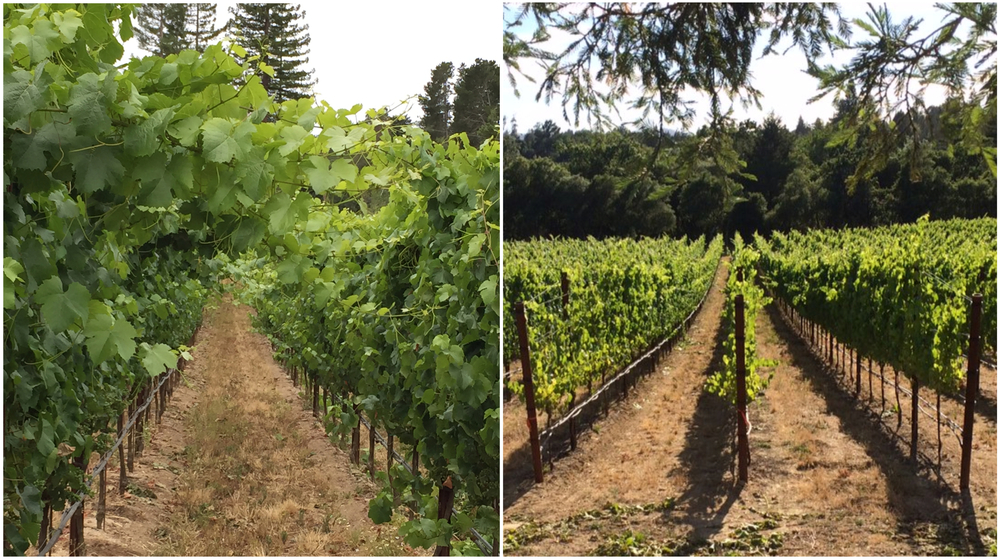 Before and after hedging