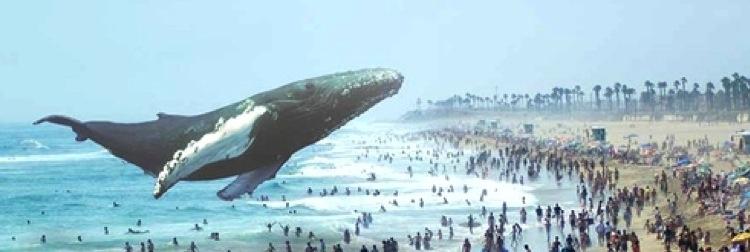 MagicLeapWhale.jpg