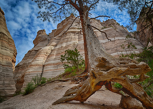 Old Tree & Bluffs