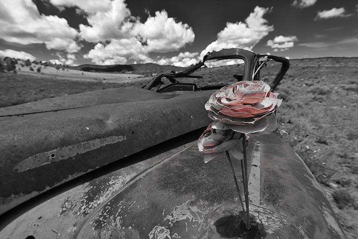 Roses & Rust