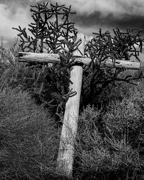 Cactus and Cross