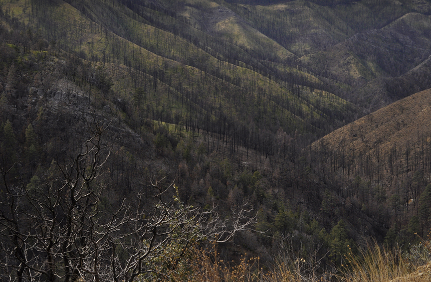 Gila National Forest, Silver City, New Mexico