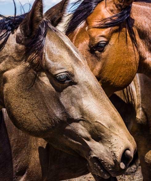 Horses, Robert Vance