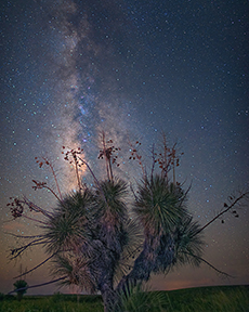2nd Place Landscapes, 'Ocotillo Bloom by Starlight', James Dale