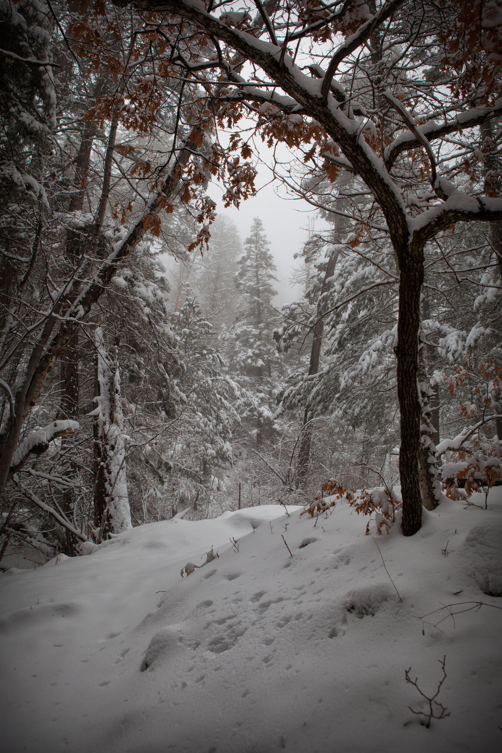 3rd Place New Mexico State Parks, 'Untouched Snowfall', Sarah McIntyre