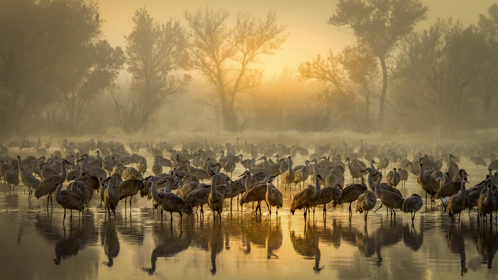 1st Place Plants & Animals, Foggy Sunrise in Bernardo' Steven Yabek