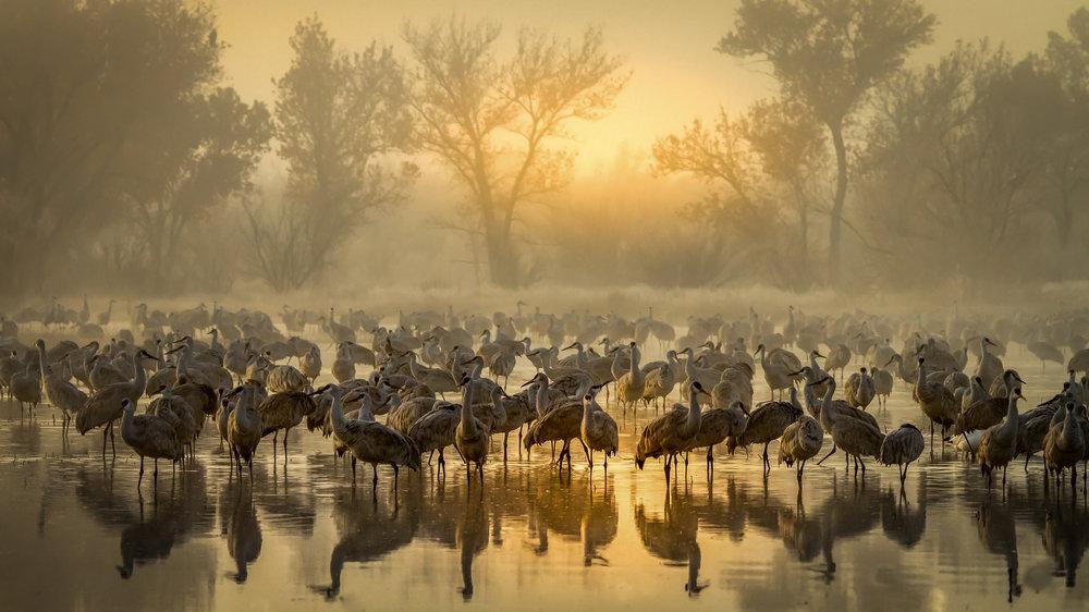 1st Place Plants & Animals, Foggy Sunrise in Bernardo' Steven Yabek