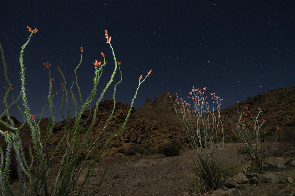 1st Place Landscapes, 'Yucca Under the Milky Way', Victor Gibbs