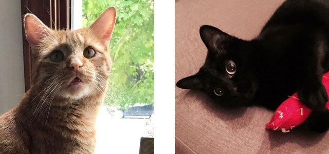 I also have two cats, Nova and Spaceman, who I never shut up about.