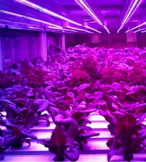 growing-system-2.jpg