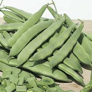 Flat Bush Beans