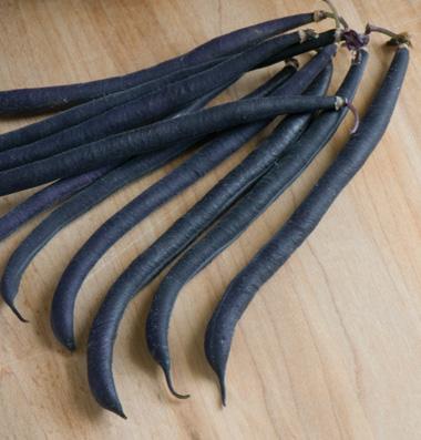 Purple Bush Beans