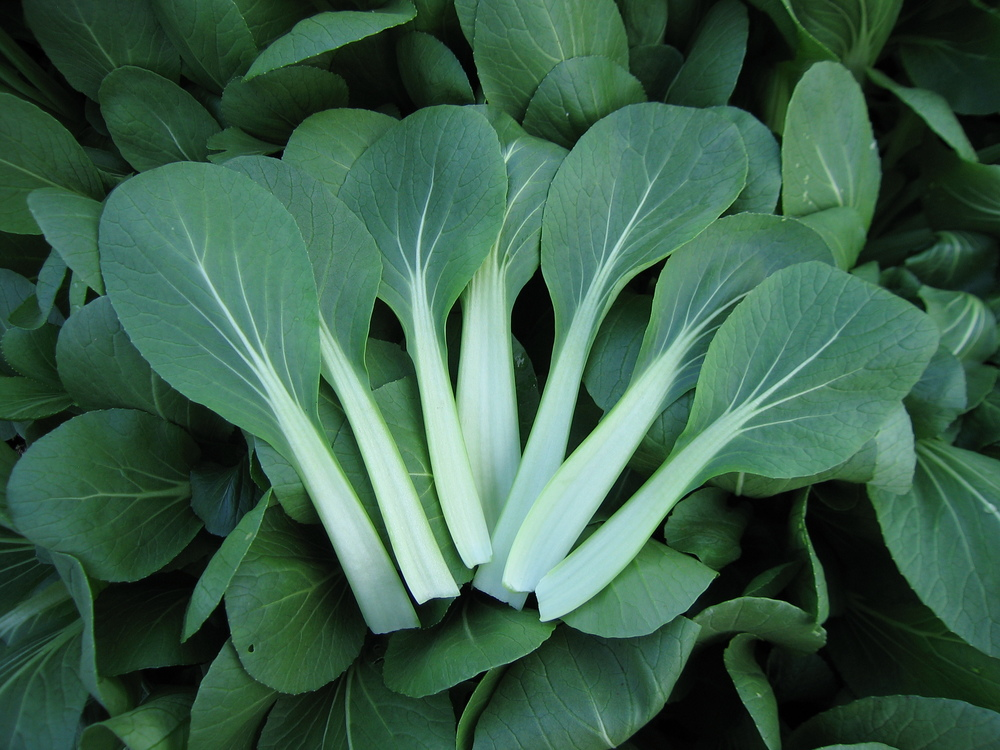 Pak Choi Colour Crunch Mix