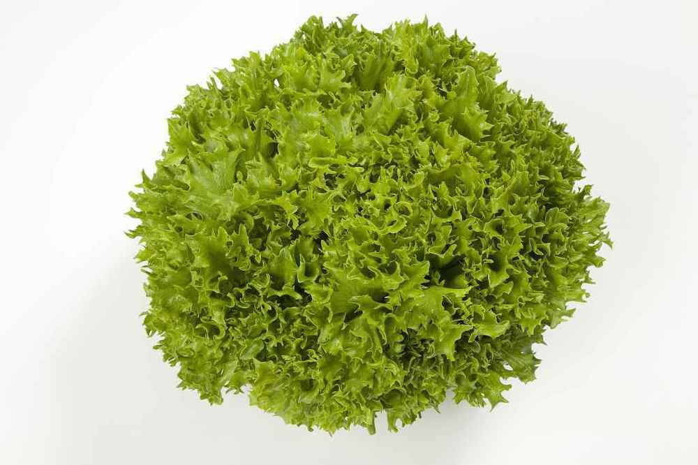 Green Multi-Leaf Lettuce