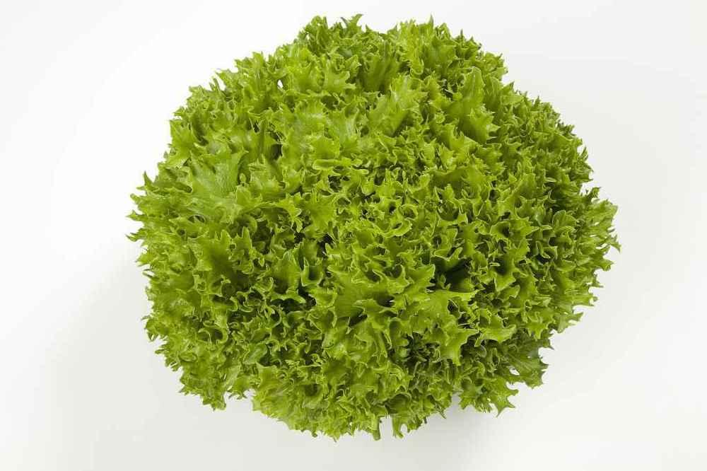 Green Multi-Leaf Lettuce