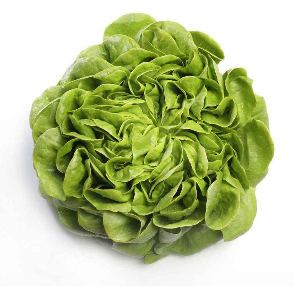 Multi-Leaf Butter Lettuce