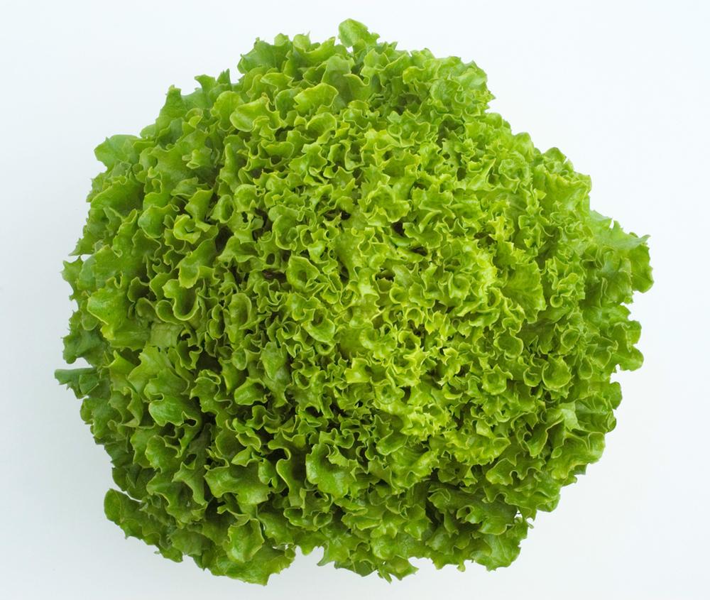 Multi-Leaf Lettuce