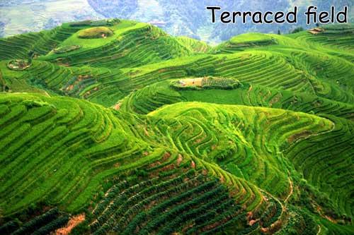 terraced-field-titian-named.jpg