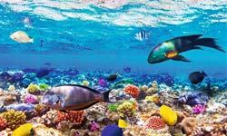 Sharm-03.jpg