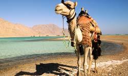 Sharm-08.jpg