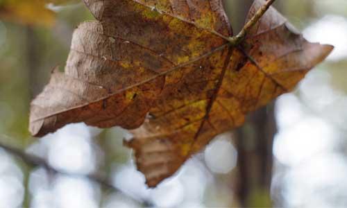 leaf-die-500x300.jpg