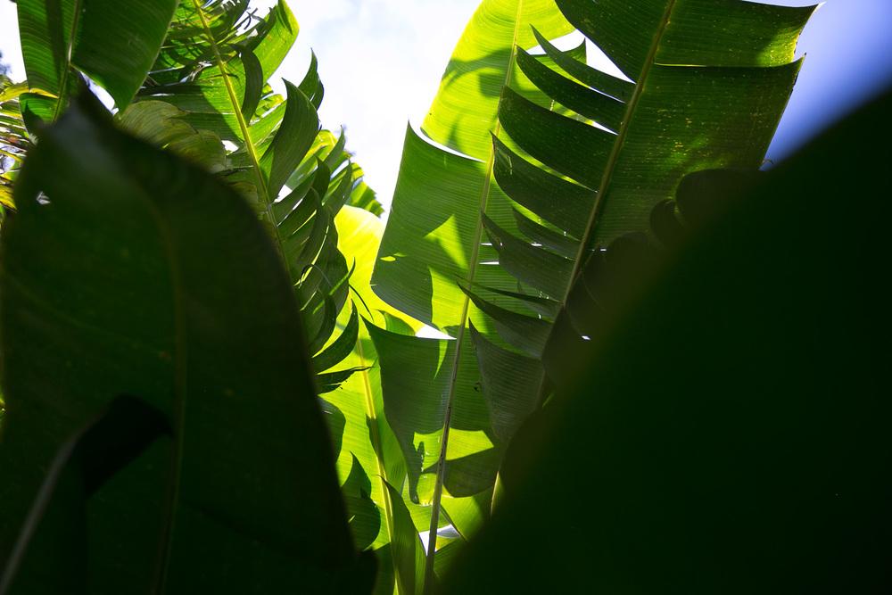 mariposa-6.jpg