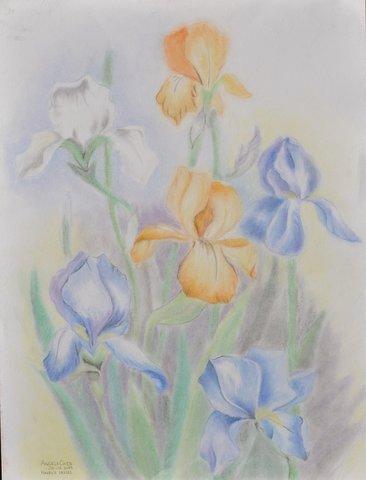 Hazel's Irises