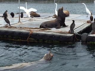 Seal tour 04.jpg