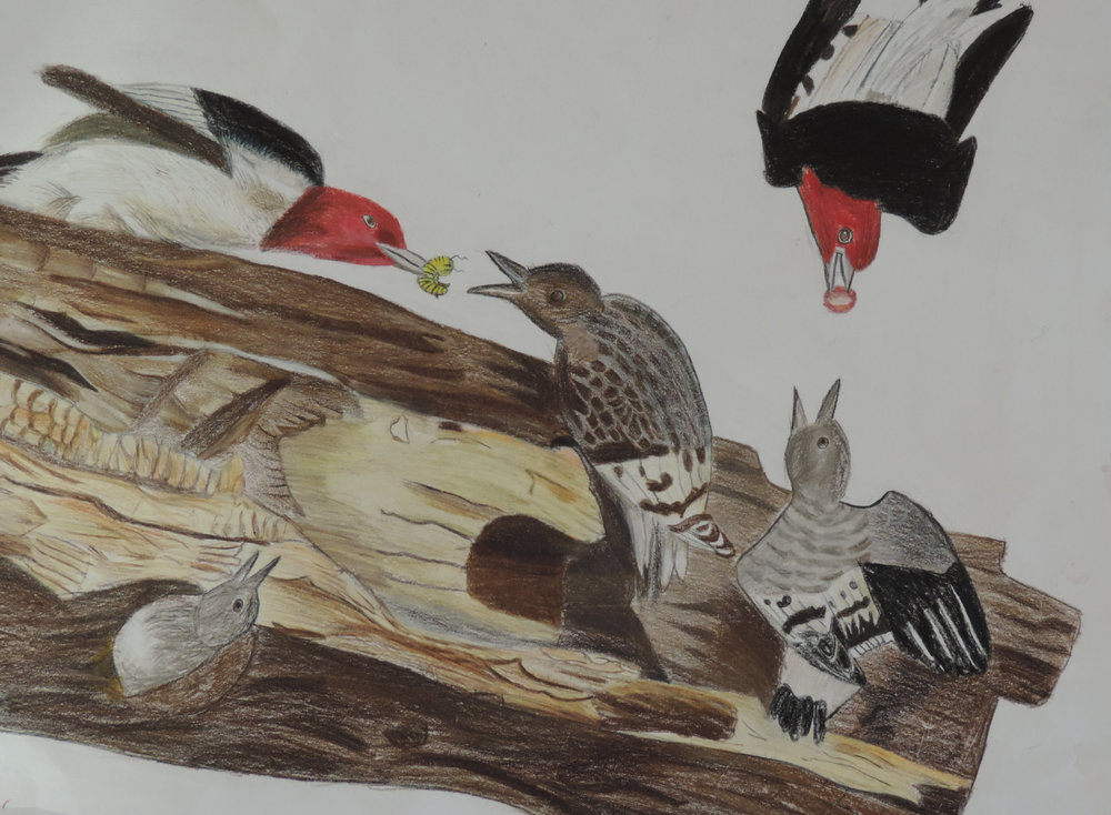 11 Bird Alina.JPG
