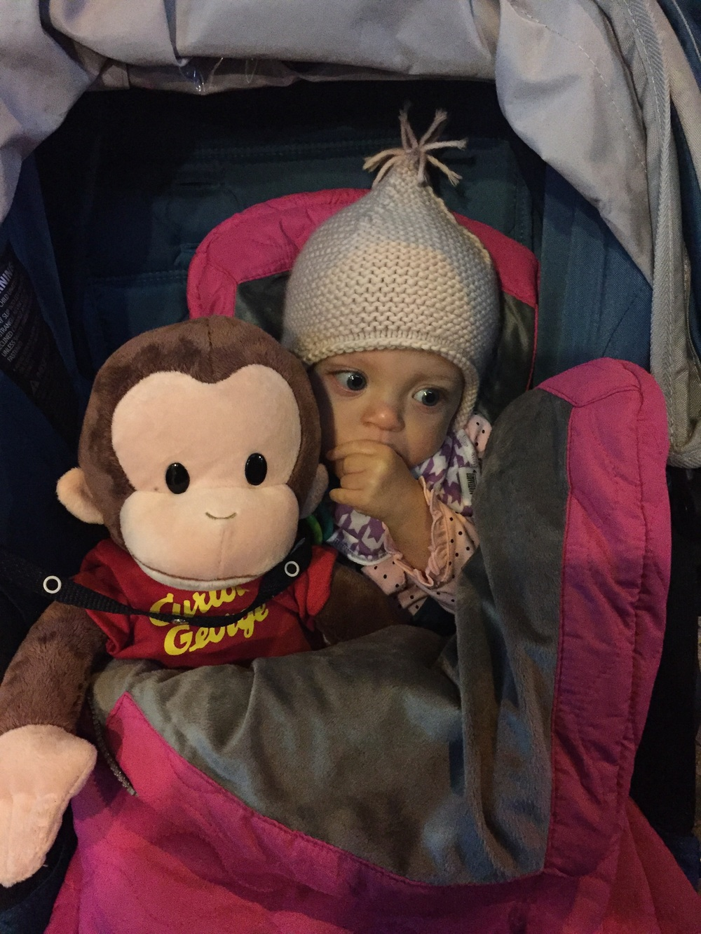 Lucie's traveling buddy.