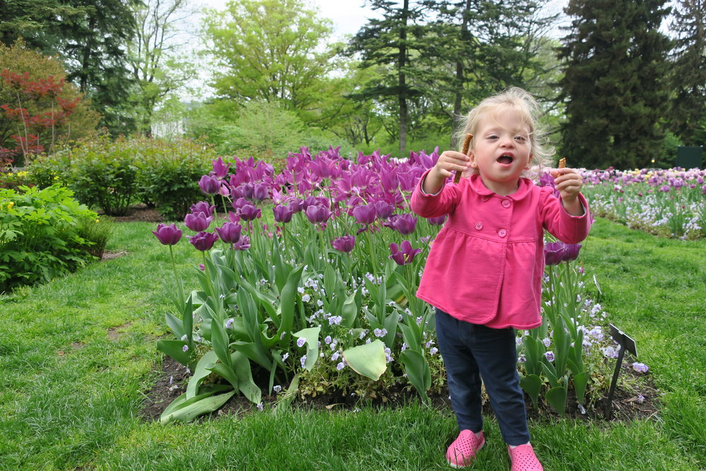 New York Botanical Garden (May 2017). The Tulips were almost as tall as Lucie!