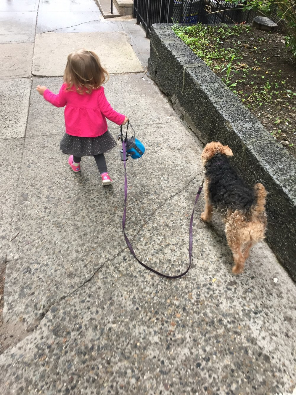 """""""I can do it."""" Lucie took Bess for a whole walk without any help from Daddy."""