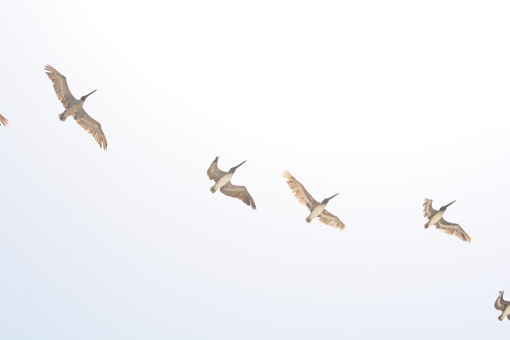 Our cousin, Kyle captured this great shot of birds in flight.