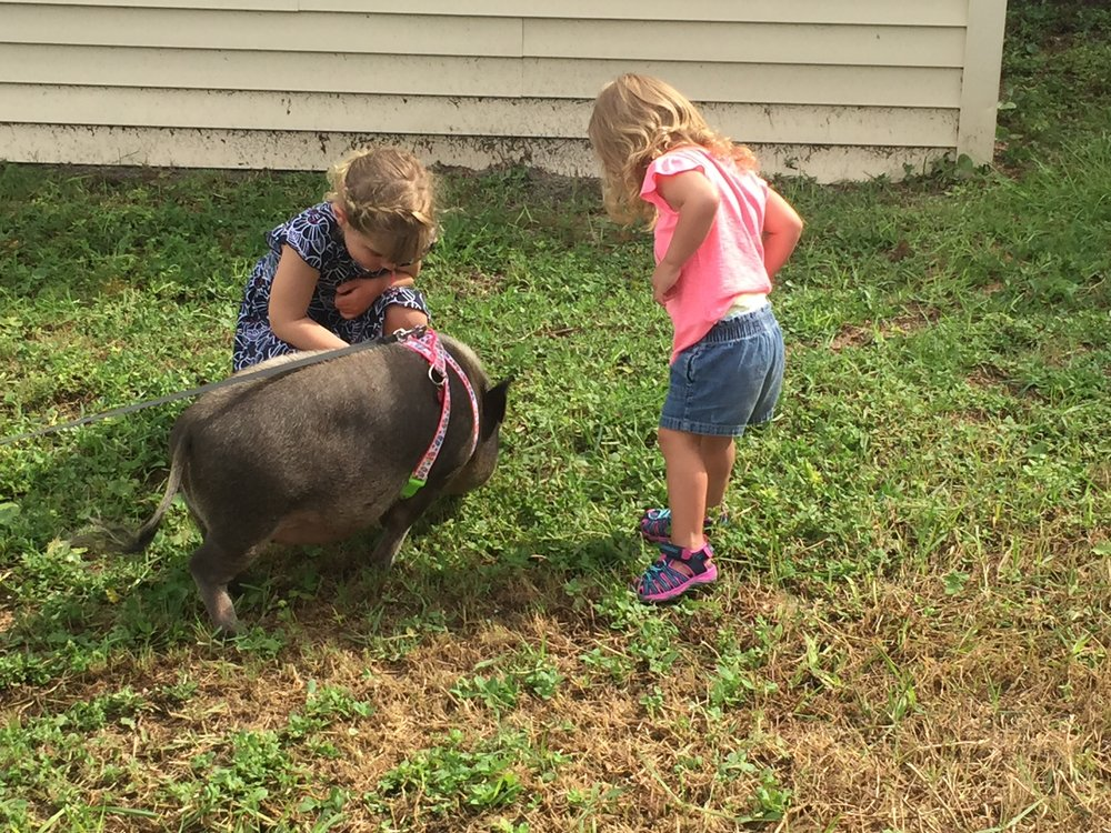 The neighbor to the house we rented had a pet pig that he would walk every morning! On the last day, Lucie and Addi went over to say hi.