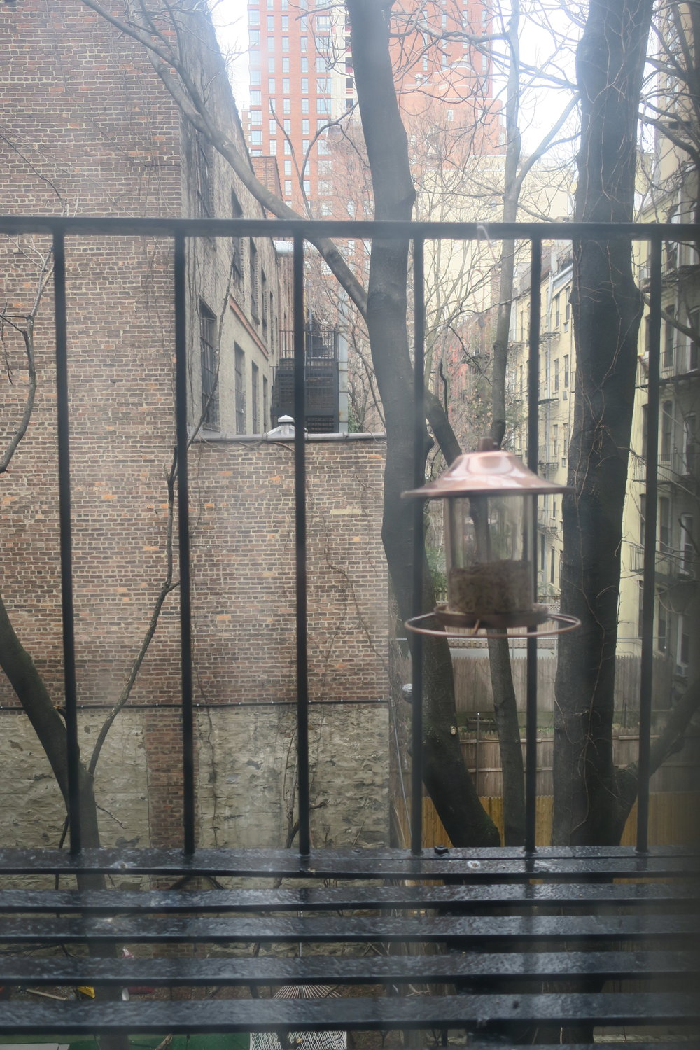 Bird feeder outside our window. We wake up to doves hooting some mornings.