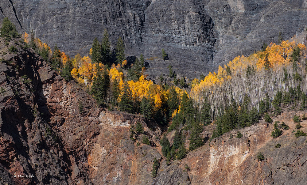 This aspen grove is high on the canyon wall.