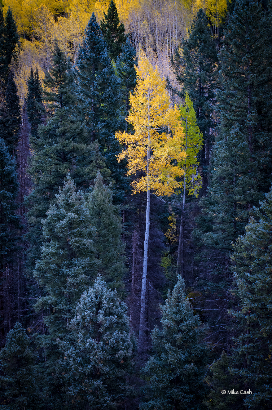 Solitary color along Camp Bird Road.