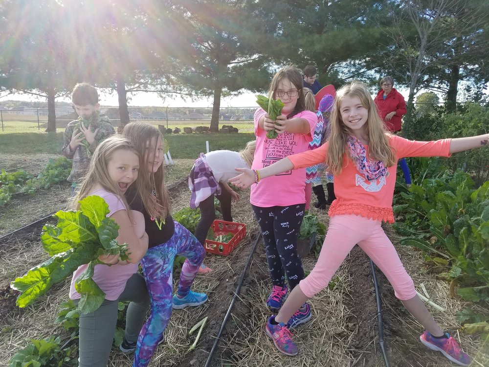 Fall 2017 Garden Clubbers harvesting chard & other goodies from the 'field garden'.