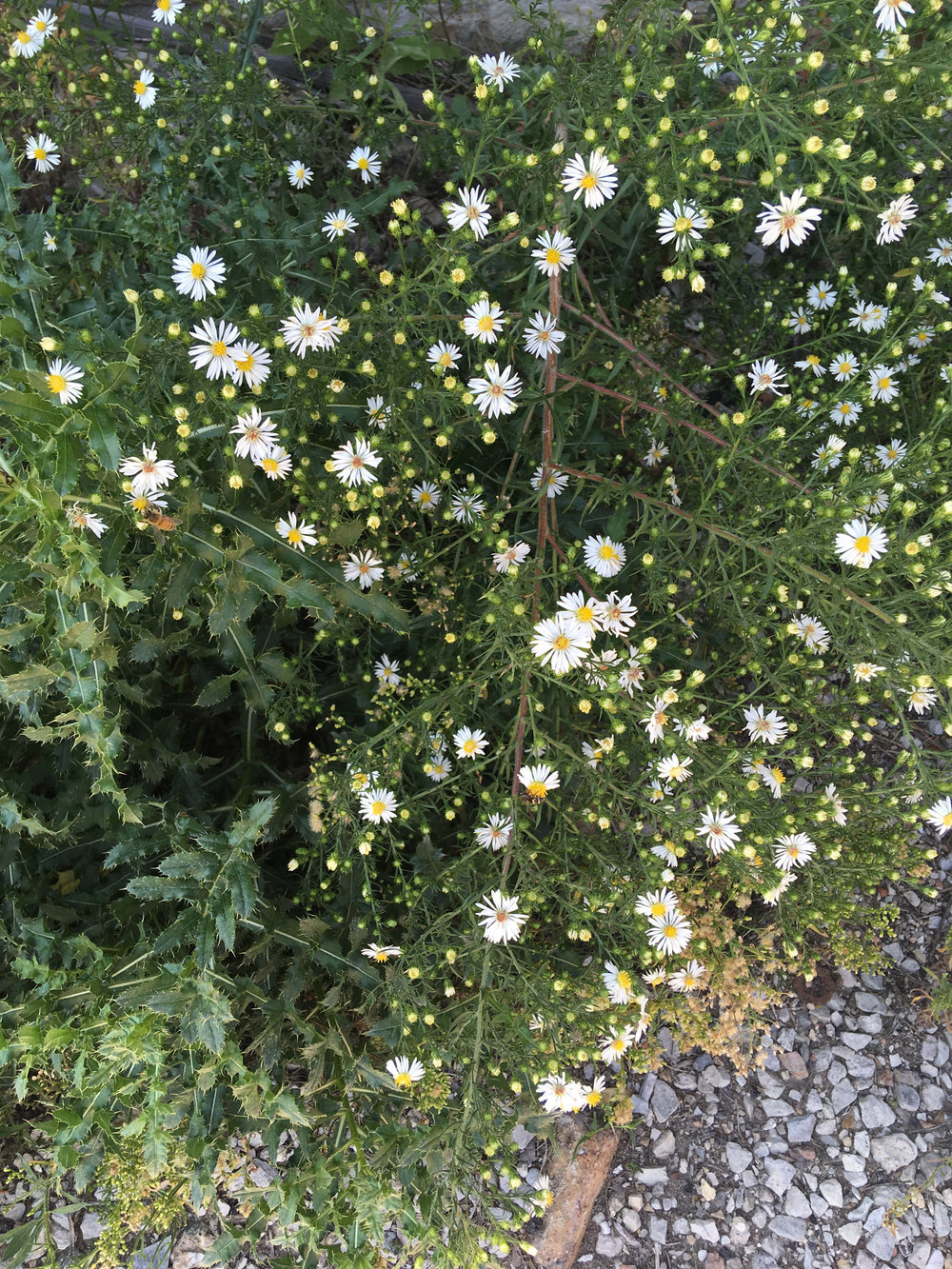 Part 1: in the beginning, flowers and weeds were collected -