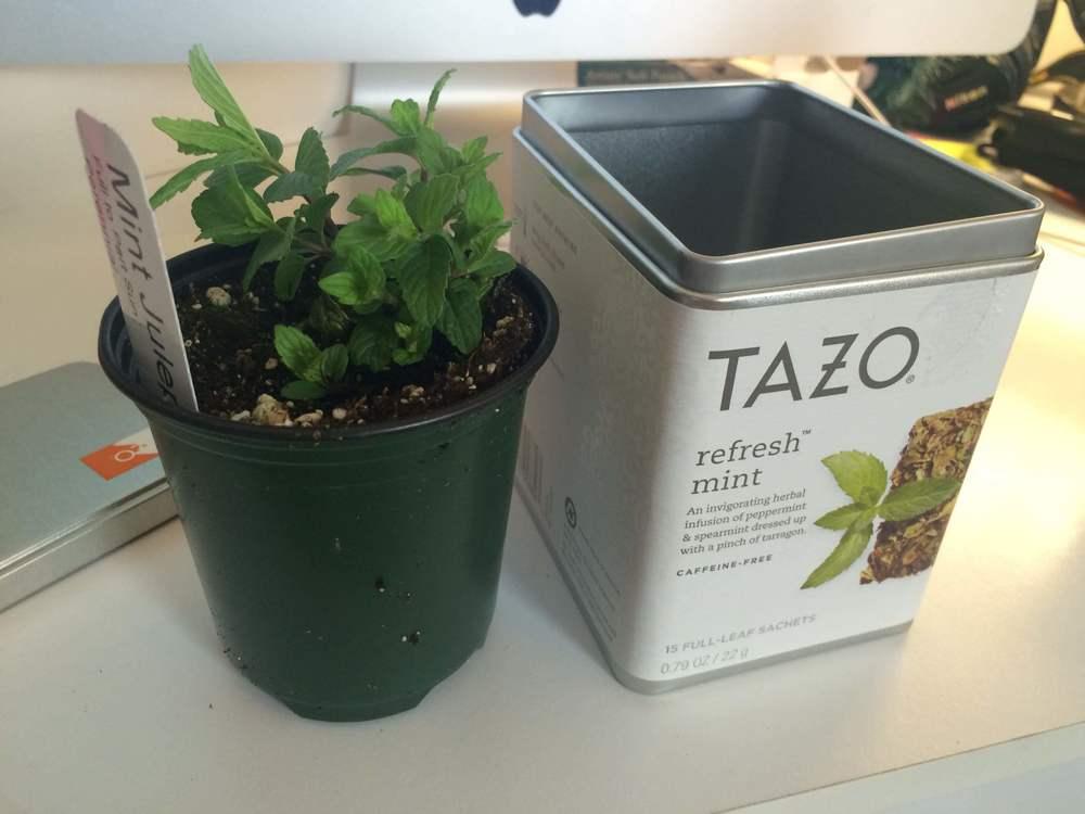 tazo-herb-planter.jpg