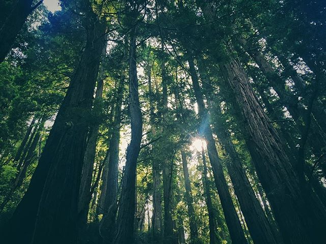 Bring back the weekend #vibes. Snapshot from Muir Woods by @craigsistential. 🌲🌳🌲🌳🌲 #nps100 #findyourpark