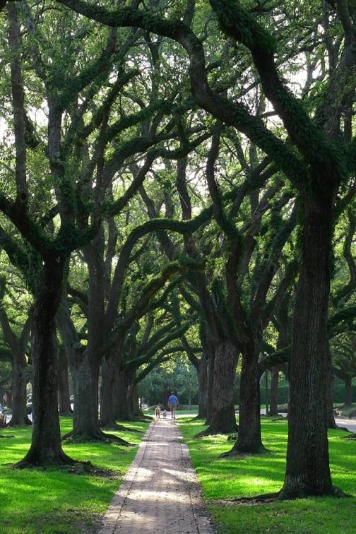 trees on bissonett street