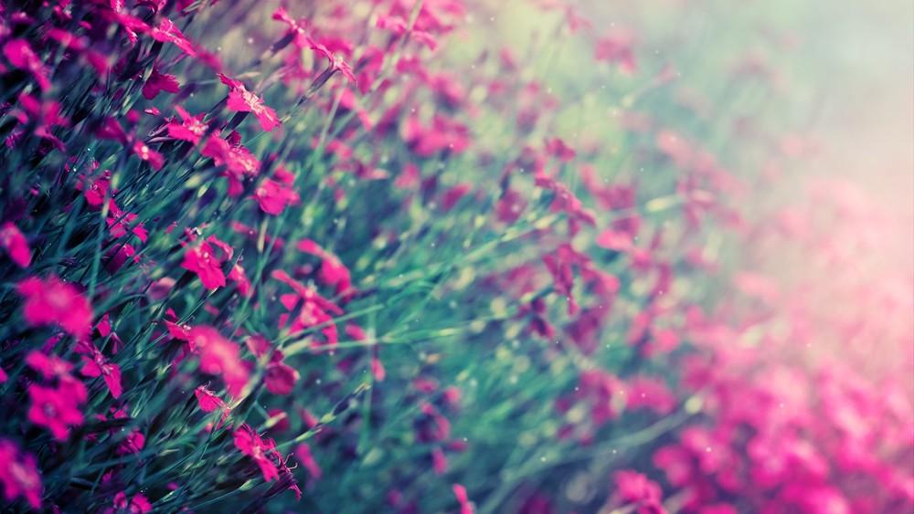 teal pink flowers