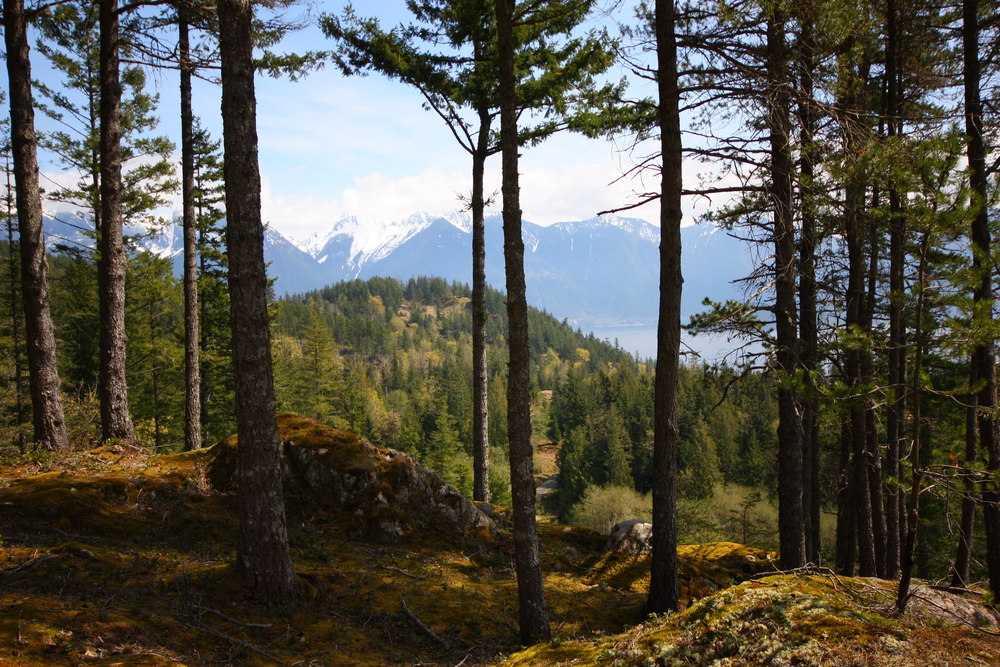 Fircom Plateau Gambier Island Forest