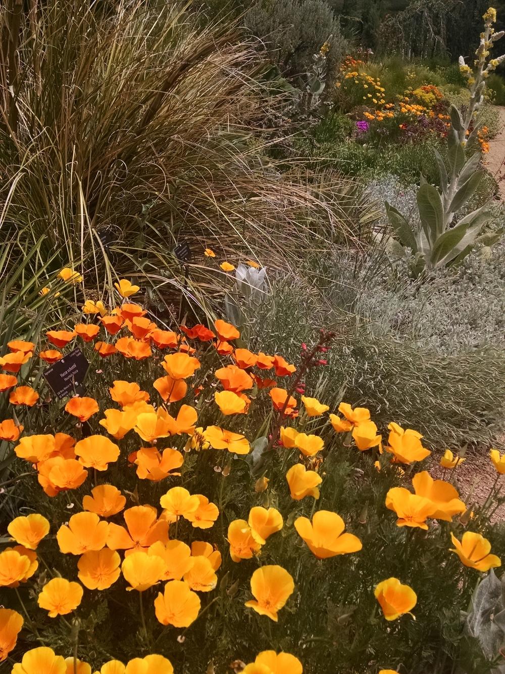 Christina Ricciardelli is a Denver landscape designer who ...